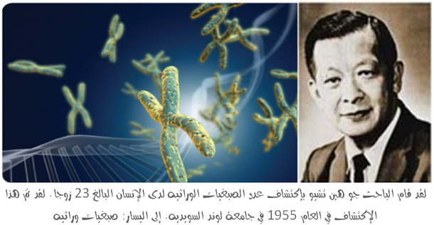 Joe Hin Tjio discovered human chromosome number in the year 1955