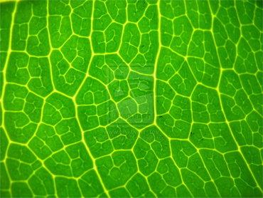 لوحه إبداع خضراء