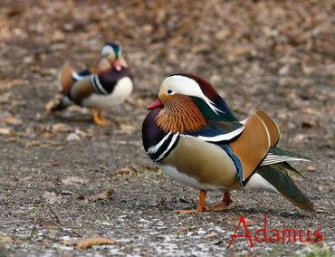 من أجمل الطيور التي رأيت