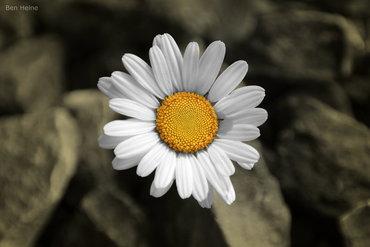 هنالك شمس في كل زهره