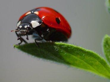 تجد المزيد من الصور لها في الجوجل بإستعمال الكلمه Ladybug